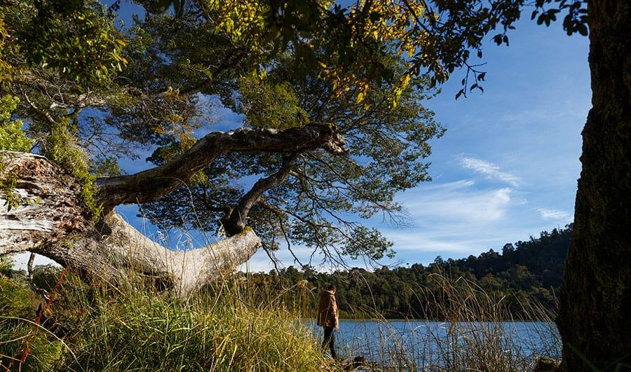 Ubicación del Parque Nacional Puyehue