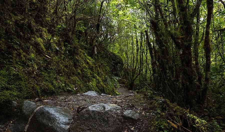 Información del Parque Nacional Queulat