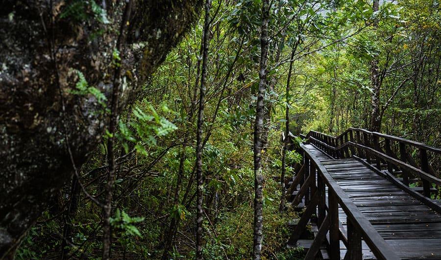 Turismo en el Parque Nacional Queulat