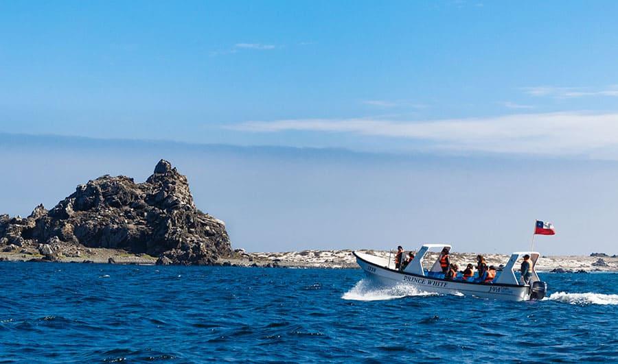 ¿Cómo es la Reserva Nacional Pingüino de Humboldt?