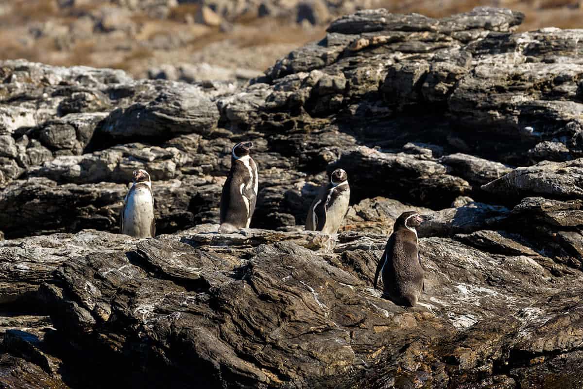 Imagen destacada de la Reserva Nacional Pingüino de Humboldt
