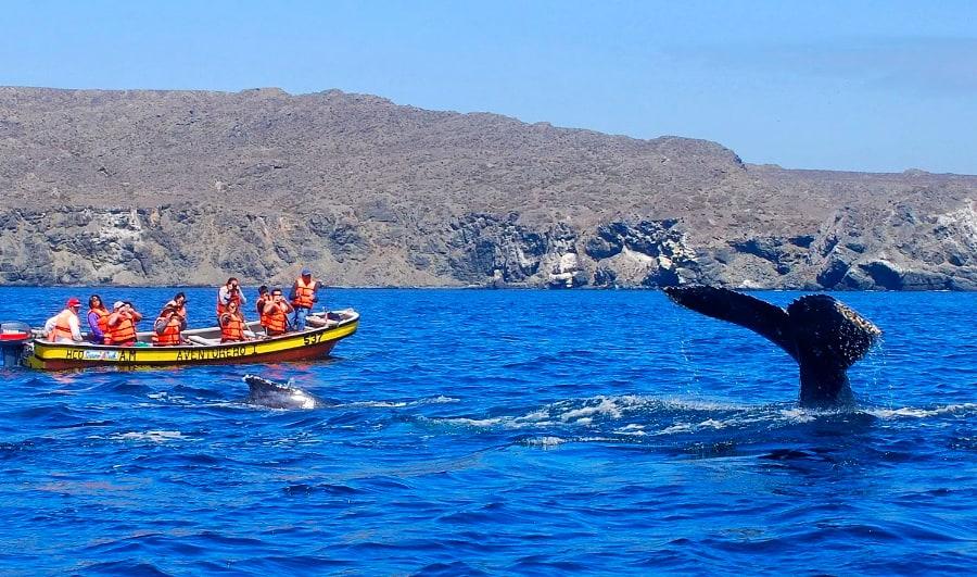 Ballenas en Caleta Chañaral de Aceituno