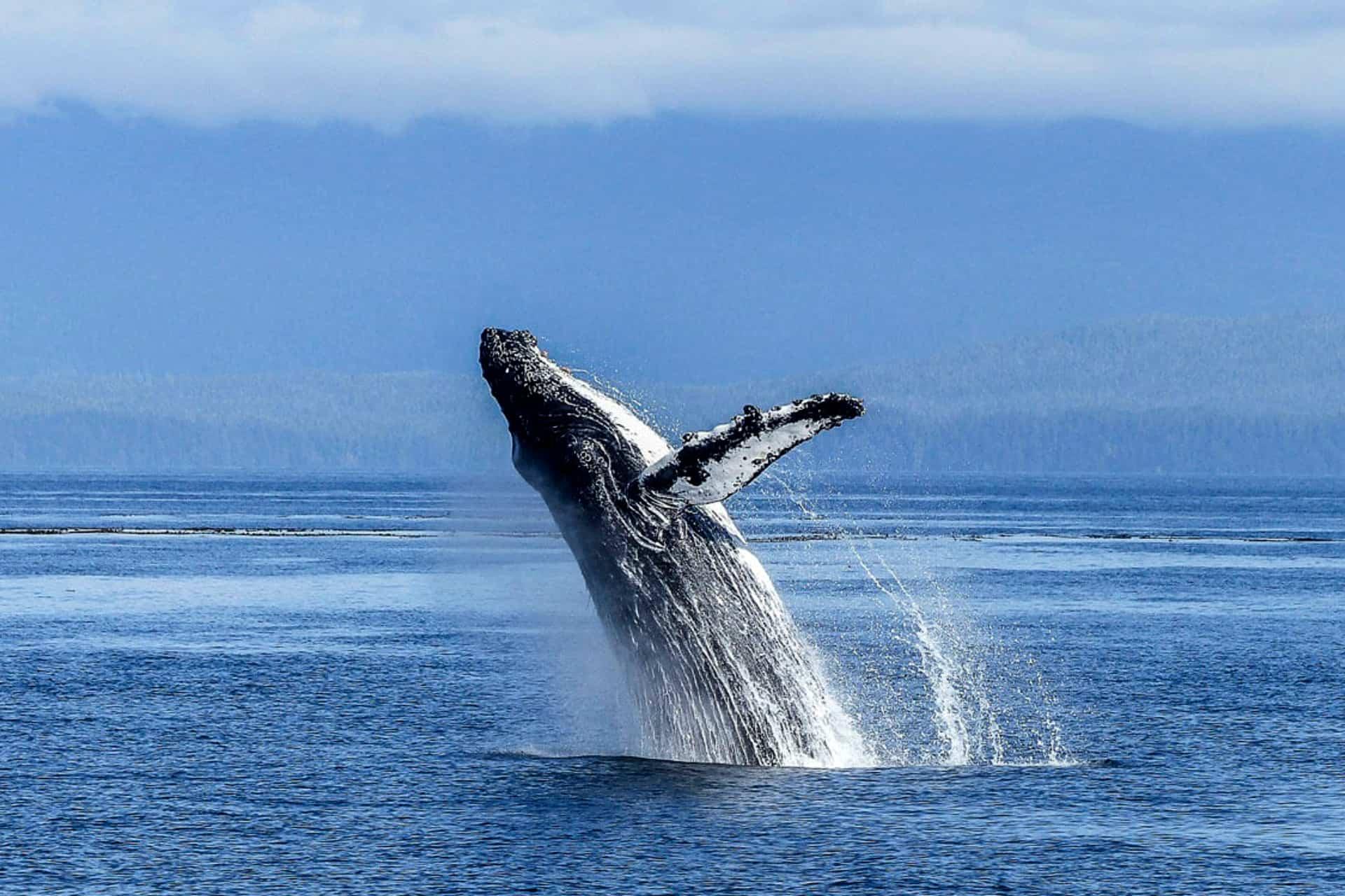 Los mejores lugares para avistar ballenas en Chile