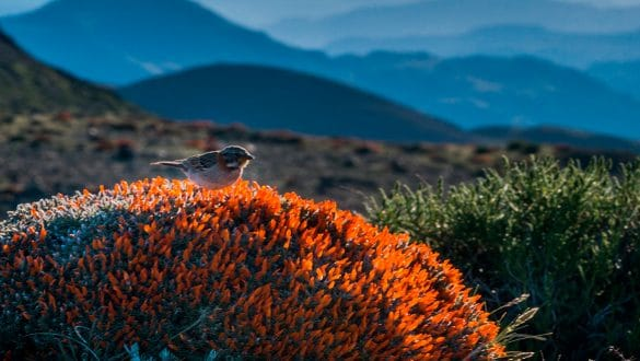 """Los mejores lugares cerca de Santiago para practicar """"Birdwatching"""""""