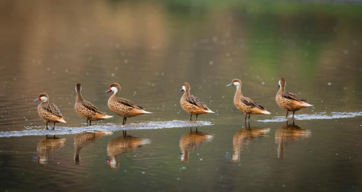 Birdwatching en el Humedal de Cahuil