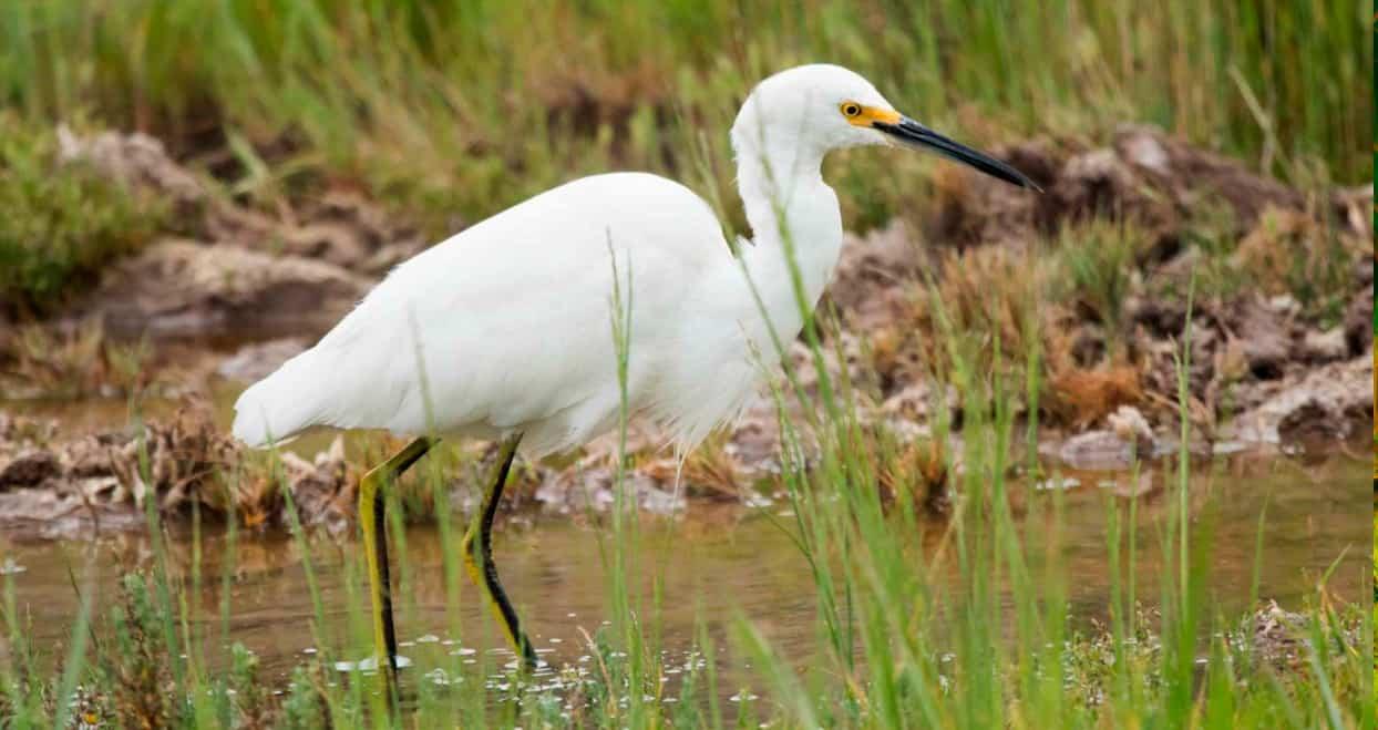 Birdwatching en el humedal de Batuco