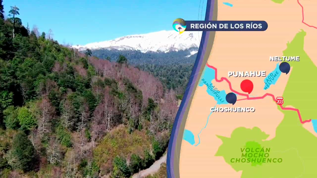 Mapa de la región de Los Ríos