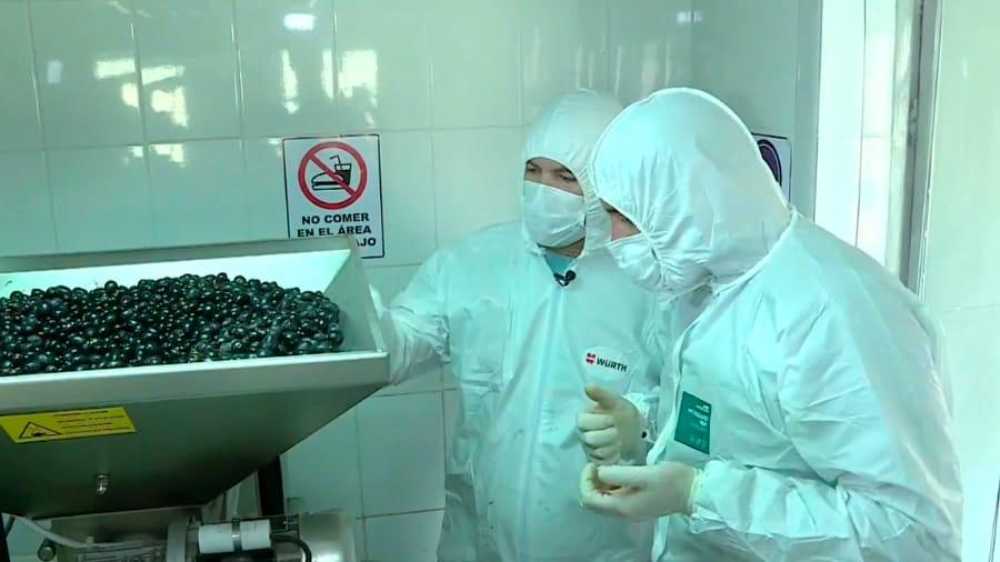 Planta de procesamiento de aceitunas