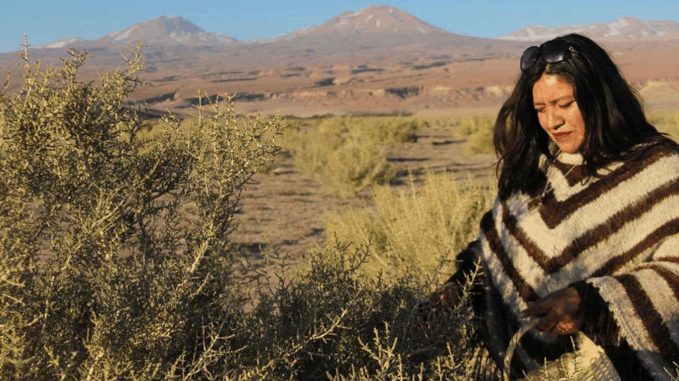 Yo Recomiendo: Patricia Pérez, la recolectora de Atacama