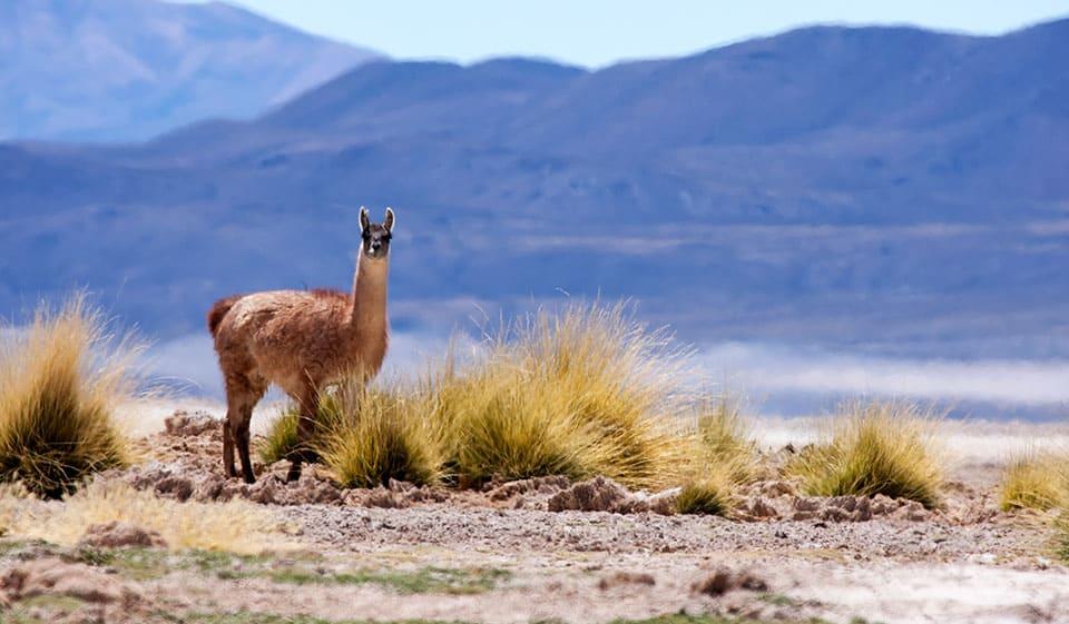 Cómo es el Parque Nacional Salar de Huasco
