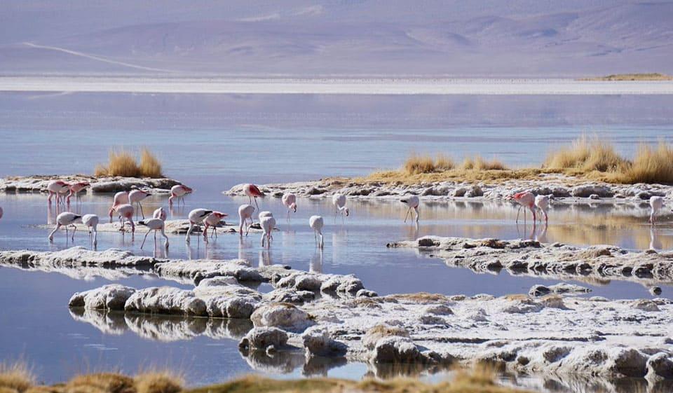 Clima Parque Nacional Salar de Huasco