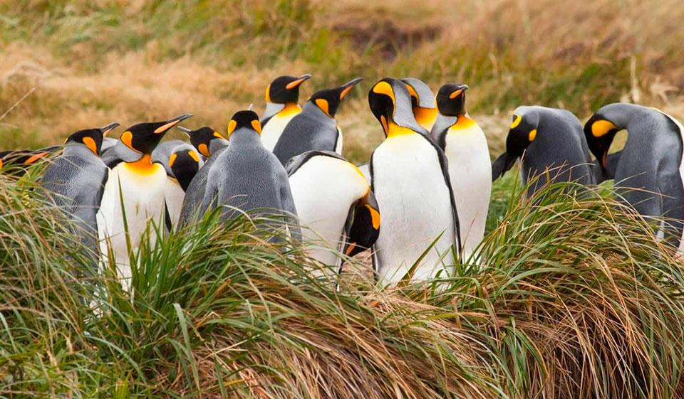 Sobre el Parque Pingüino Rey
