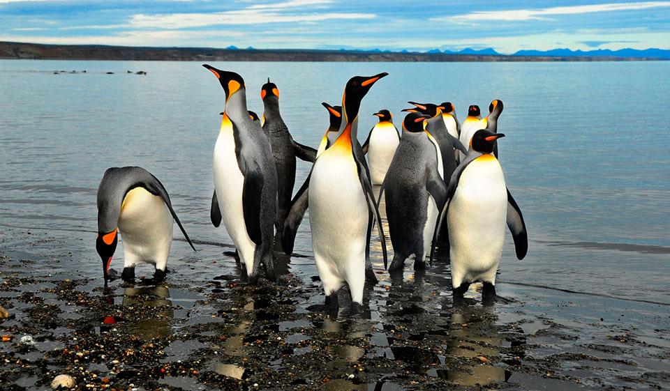 ¿Cómo es el Parque Pingüino Rey?