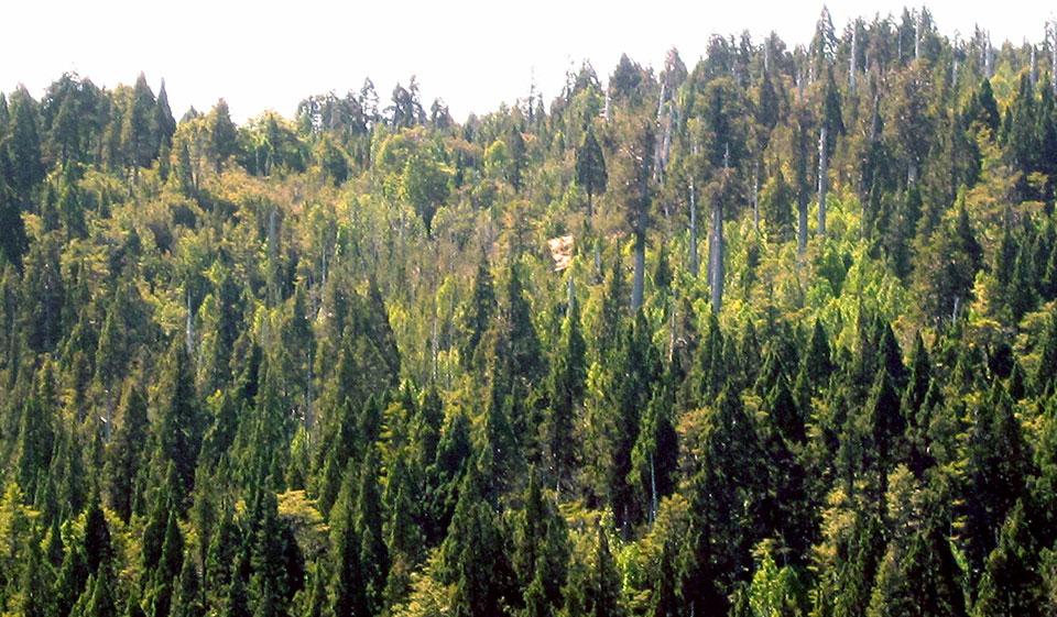 Clima Parque Nacional Alerce Costero