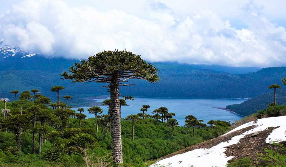 Clima del Parque Nacional Conguillio