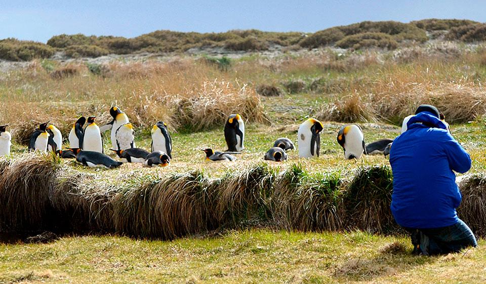 Clima del Parque Pingüino Rey