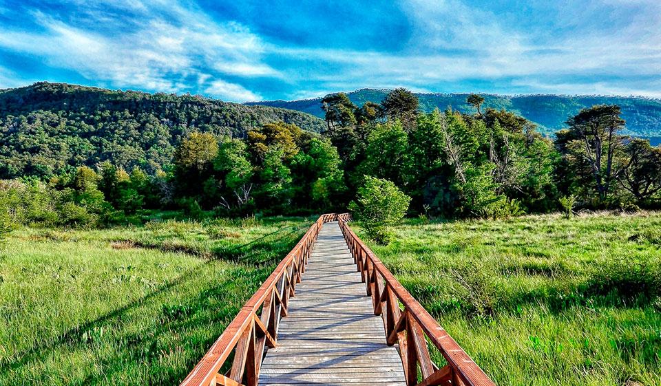 Sobre el Parque Nacional Alerce Andino