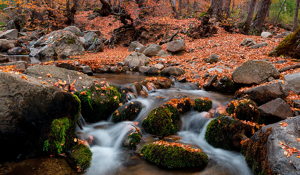 Sobre el Santuario de la Naturaleza Alto Huemul